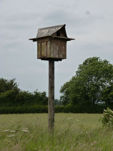 A well used barn owl box on our farm. Constructed by Edward Cooke
