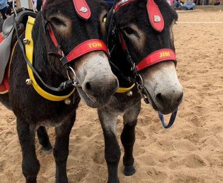 A difficult year for Nuttall's Donkeys