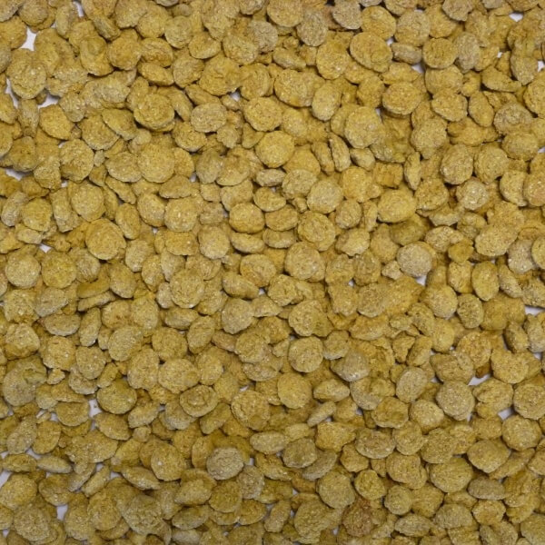 Extruded Wheat Yellow